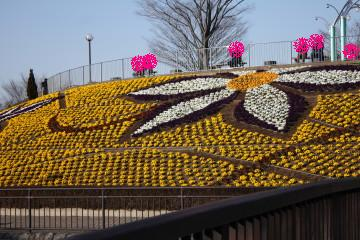 パンジーのお花でクレマチスのお花をあらわしています