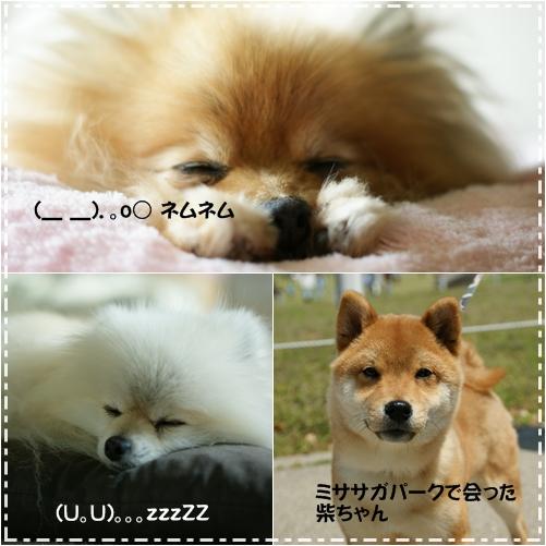 531_20100601083832.jpg