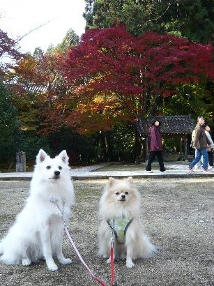 カメラの後ろは人だかり~(^^;)
