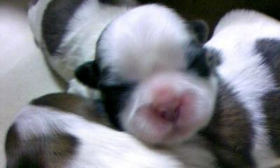 2009-2-21 019