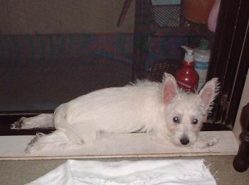 Puppy_2001.jpg