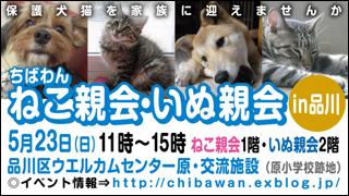 nekoinuoyakai20100523_320x180.jpg