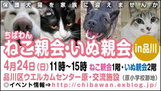 nekoinuoyakai20110424_320x180.jpg