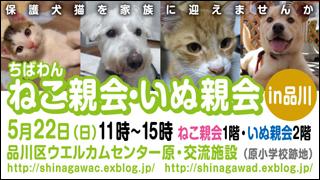 nekoinuoyakai20110522_320x180.jpg