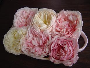 roserose4.jpg