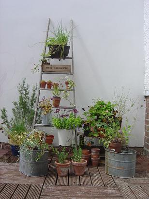 wooddeckplants.jpg