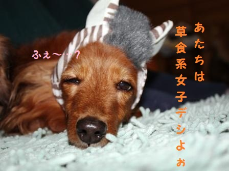 シマ・ウマ子デシ…