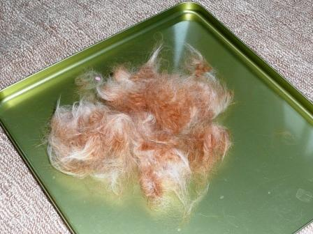 衝撃のモフ毛