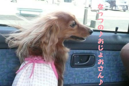 お出掛けデシ~♪