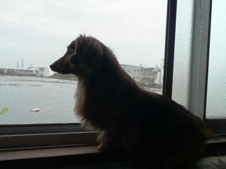 窓辺のゴン