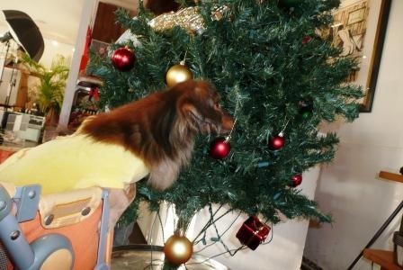 クリスマツツリー♪