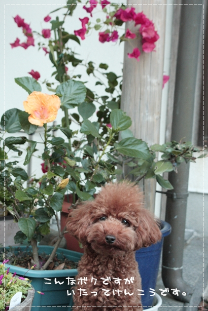 お花とボク