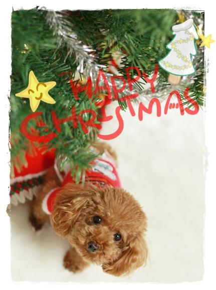 クリスマスツリーの下で