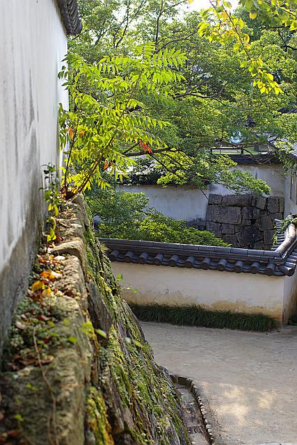 蔦の絡まる石垣