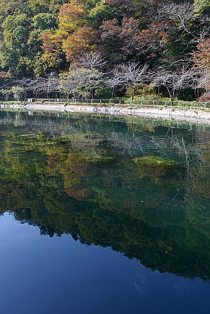 湖面の秋晴れ