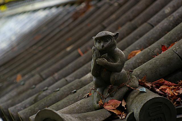 寒そうなお猿さん