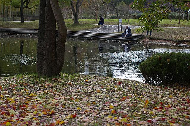 背を丸め 池を見つめて なに思う
