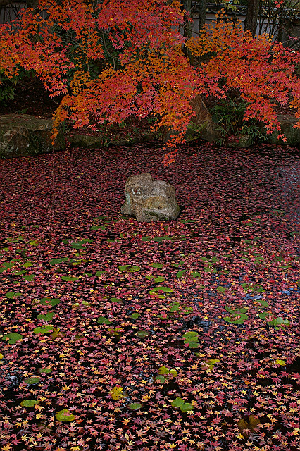 風に舞い 水面を覆う 散り紅葉
