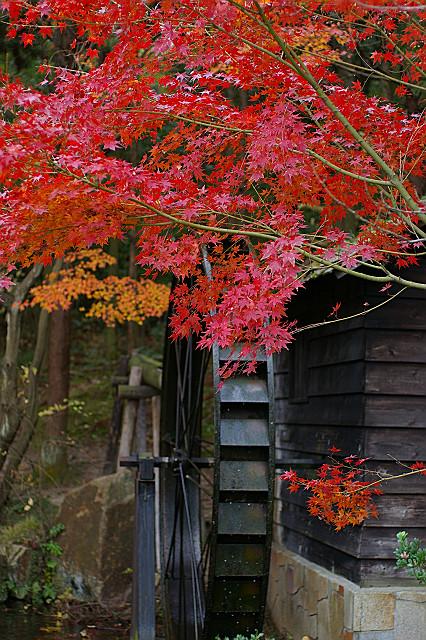 どこよりも 綺麗に染まる 水車小屋