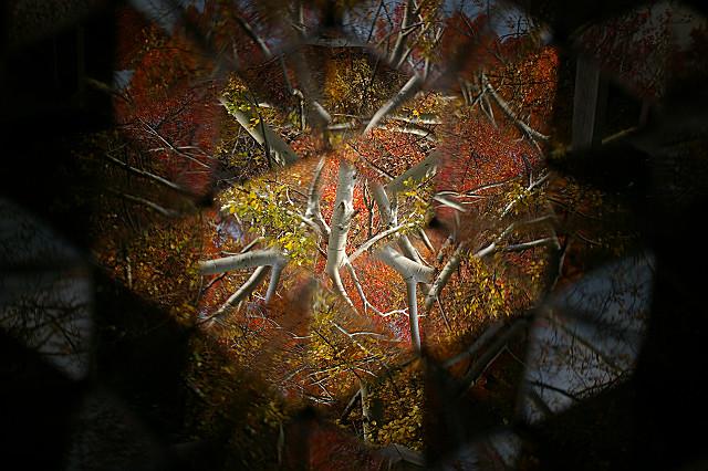 晩秋の 色を散らして 万華鏡