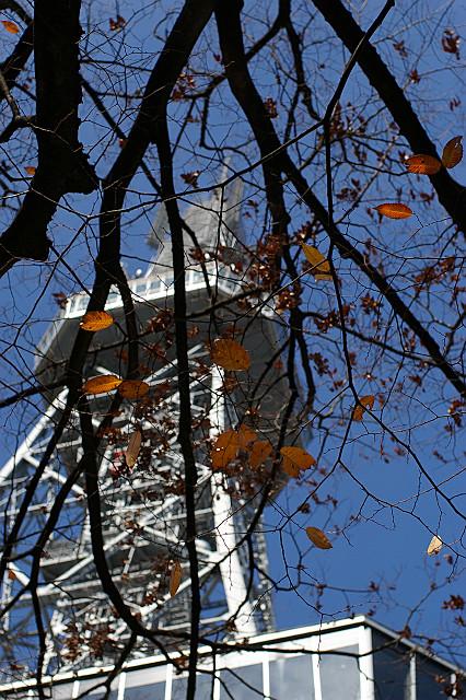 見通しが きいて眺める テレビ塔