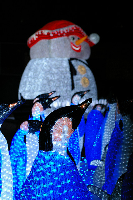 ペンギンの 喜ぶ寒さに 耳凍る