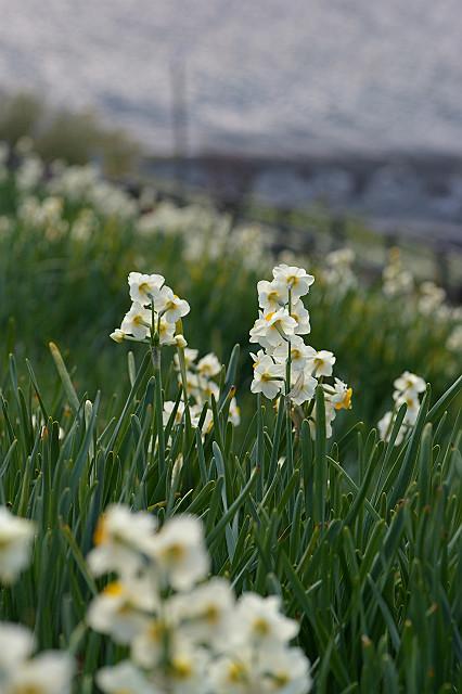 断崖を 小兵の花が 埋め尽くす