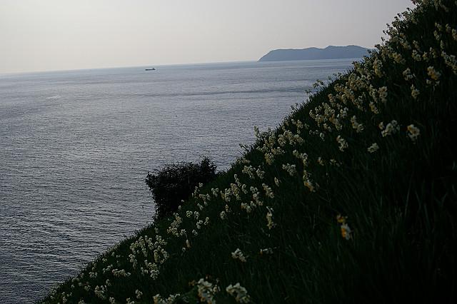 島影を 横切る船や 水仙郷