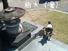 狛犬右(凜)2
