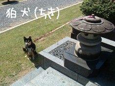 狛犬左(ちき)2