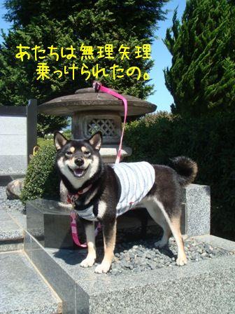 狛犬右(凜)