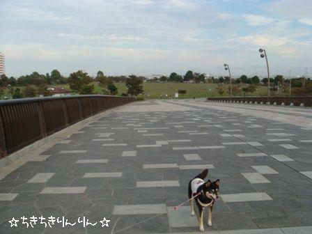 大島小松川公園③