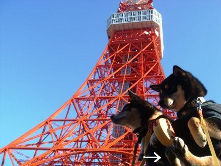 東京タワー③