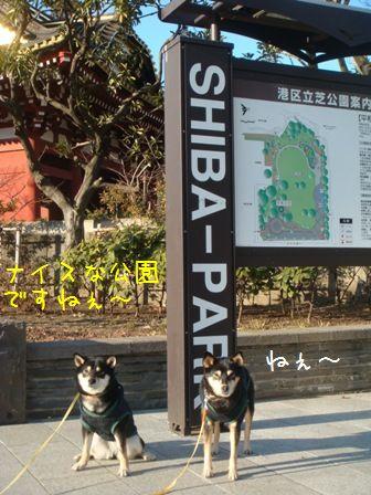 shiba-park①