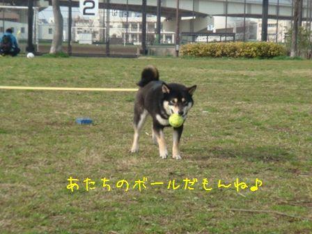 大島小松川公園?