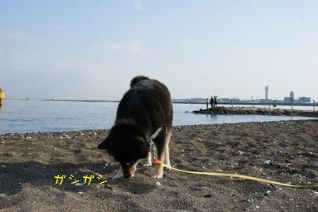城南島海浜公園⑧