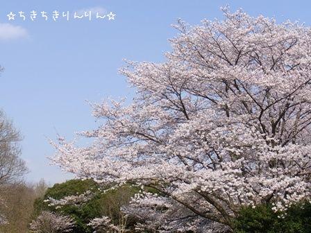 秋が瀬公園①