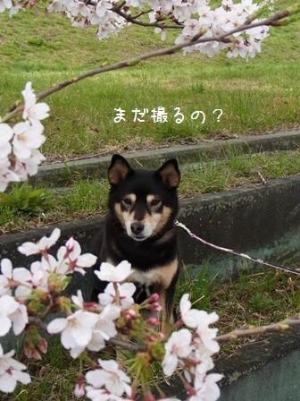 戸田桜堤②