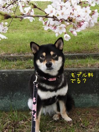 戸田桜堤③