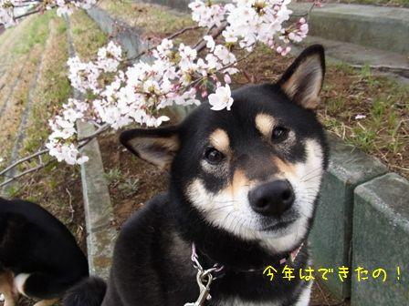 戸田桜堤⑤