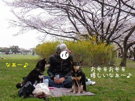 桜三昧?-?