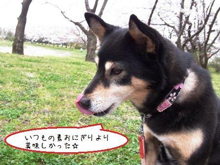 桜三昧②-⑤