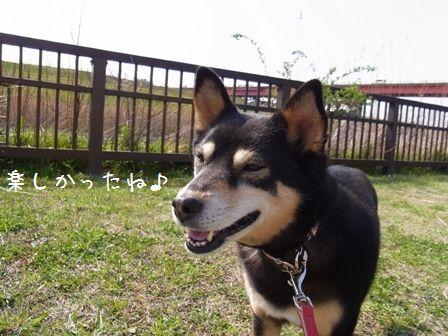 桜三昧②-⑫