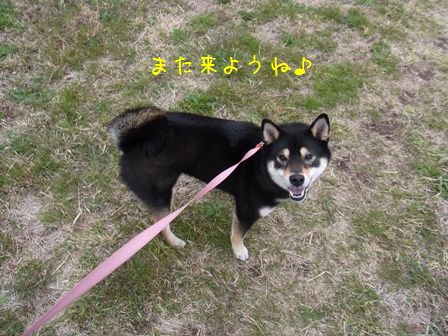 桜三昧②-⑬