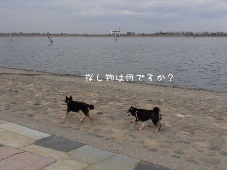 渡良瀬遊水地①