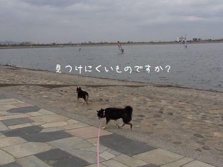 渡良瀬遊水地②