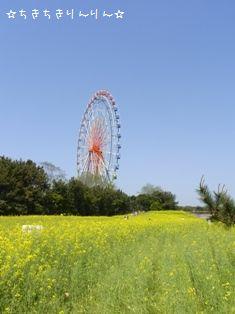 ひたち海浜公園③