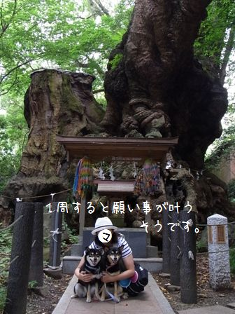 来宮神社⑥