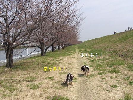 戸田公園荒川堤②