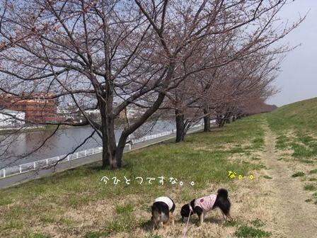 戸田公園荒川堤③